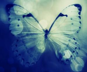 butterfly transformation chromemusic
